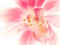Tulpen-298