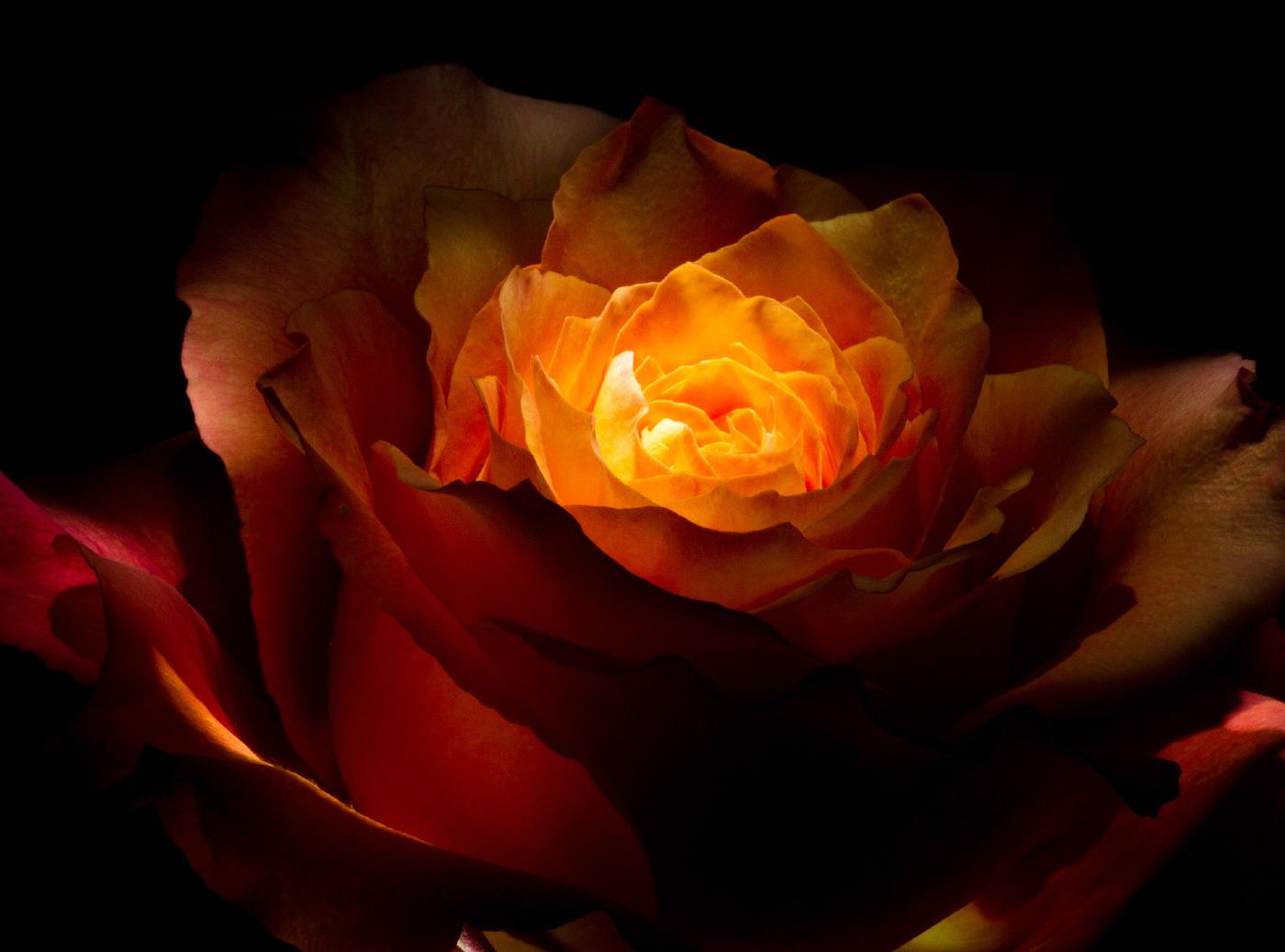 rose_juli_12-016