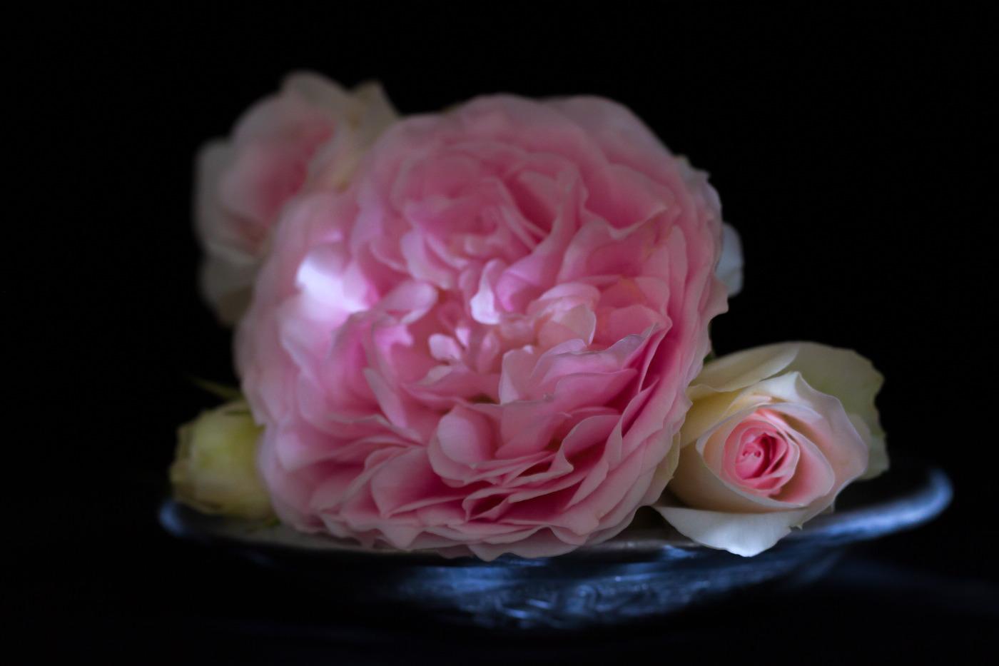 rosehosemaster_mg_0071